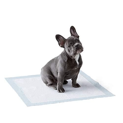 Amazon Basics - Tappetini igienici assorbenti per animali domestici, misura standard, 50 pz